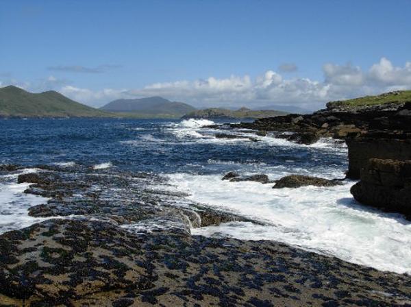 Album photos de Pêche & Galerie Le 'shore-angling' (cette peche en bordure de mer) dans le sud-ouest du Kerry (Irlande)